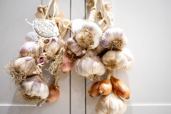 How to Grow Garlic Indoors? Growing Garlic Bulbs and Scapes in Pots