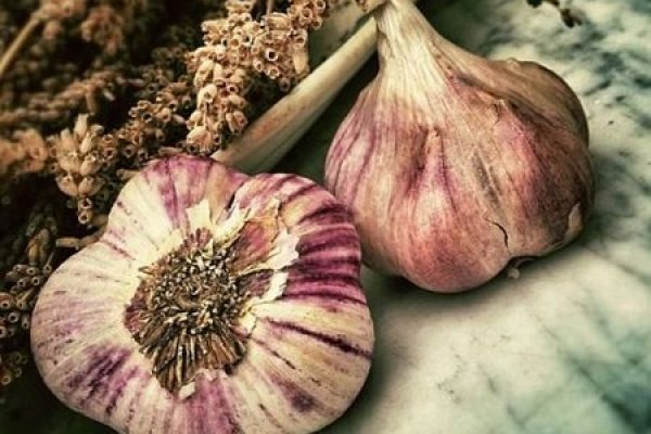 Garlic Crop Diseases: Tips to Manage and Prevent