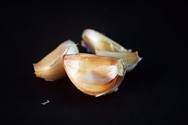When to Plant Garlic in various parts of USA