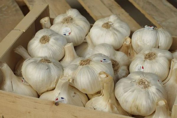 Grow Different Types of Garlic I Requirements