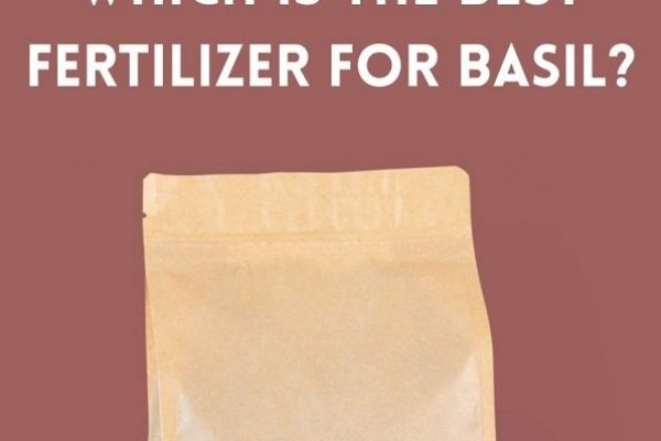 How to Choose the Best Fertilizer for Basil?